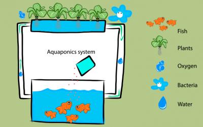 Understanding Aquaponics and Hydroponics