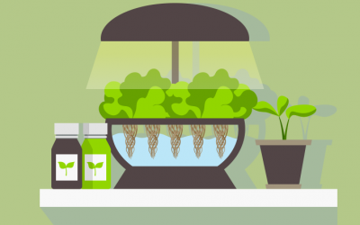 The Advantages Of Hydroponics
